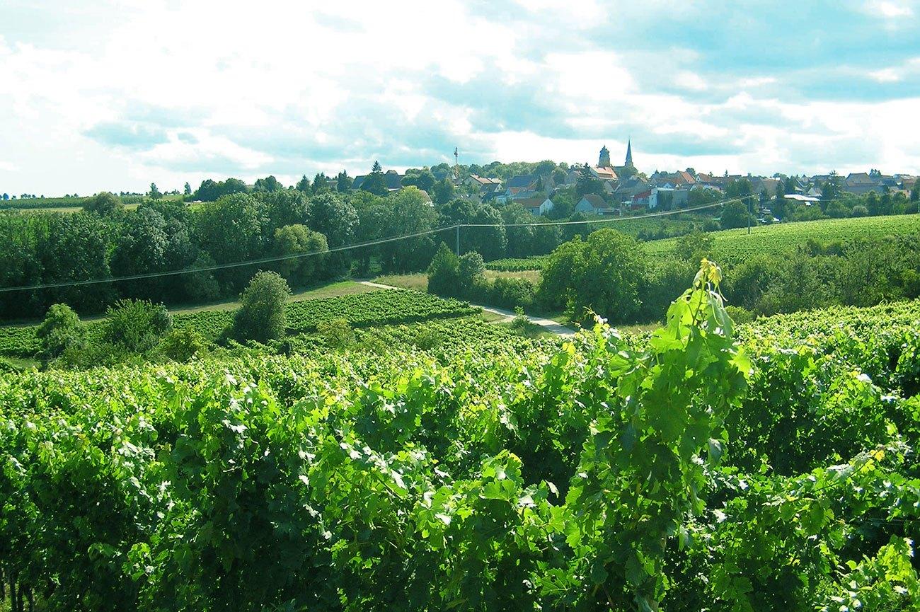 Weinlage Blücherpfad